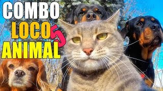 COMBO LOCO ANIMAL 5