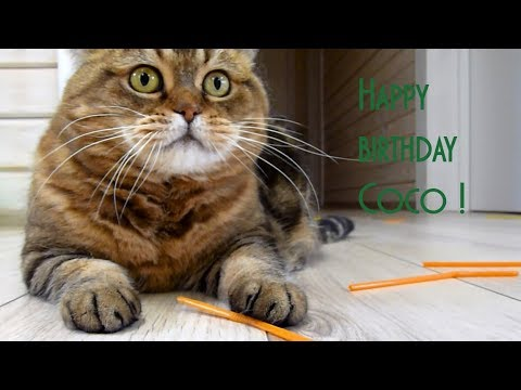 The best funny kitten, mom cat, cute cat  , Happy birthday Coco!