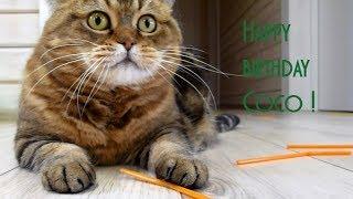 The best funny kitten, mom cat, cute cat  , Happy birthday Coco!