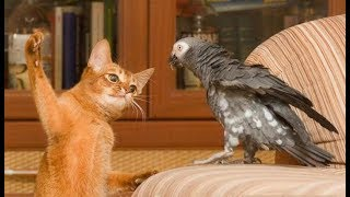 AFRICAN GREY PARROTS Are Such FUNNY BIRDS - Cute And Funny Parrot Videos Compilation 2018 [BEST OF]