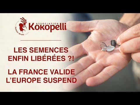 Les semences enfin libérées ?! La France valide, l'Europe suspend.