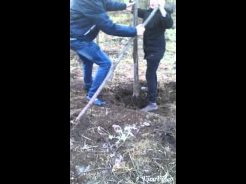 Дерево упало 😱, а наши мальчики его поставили😄