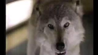 KTRV-12 commercials, February 1994-D