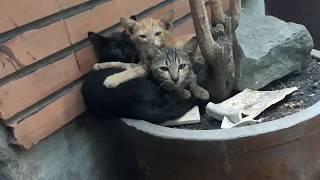 Nhặc mèo hoang về nuôi 🐱🐱!!!