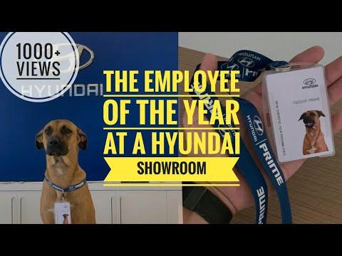 TUCSON PRIME - STREET DOG | EMPLOYEE OF THE YEAR | HYUNDAI | CAR SALES MAN | YADNUS GLITZ