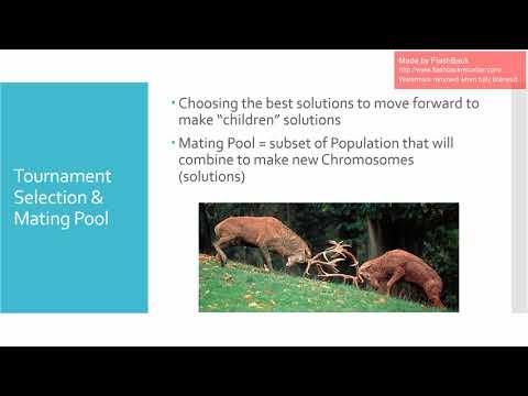 DSA5303 Project - Genetic Algorithm & Portfolio Optimization