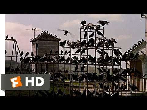 Crows on the Playground  The Birds 511 Movie  1963 HD