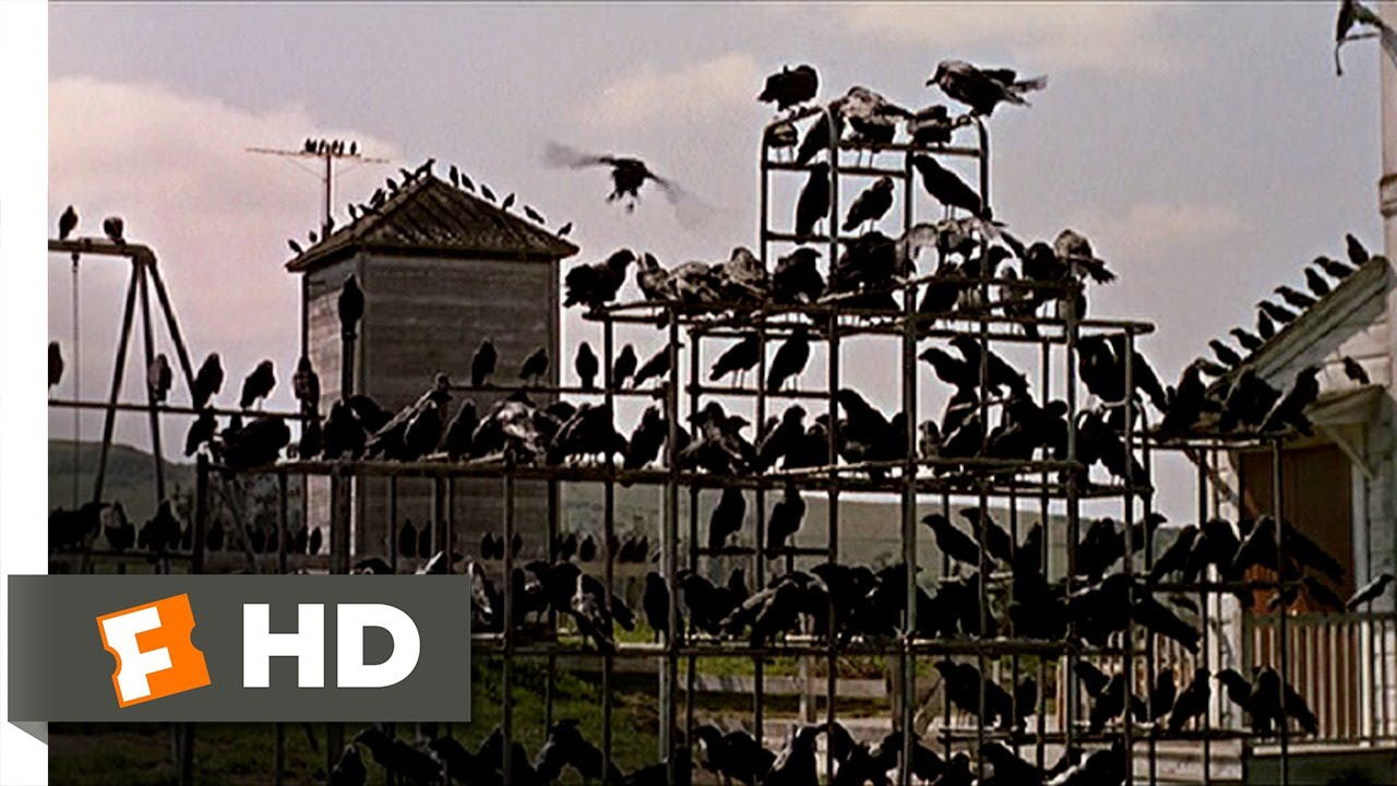 Crows On The Playground The Birds 5 11 Movie Clip