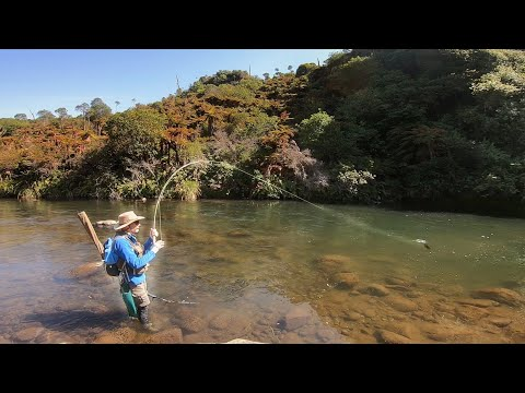Fishing The Wilderness Of New Zealand For Large Trout.