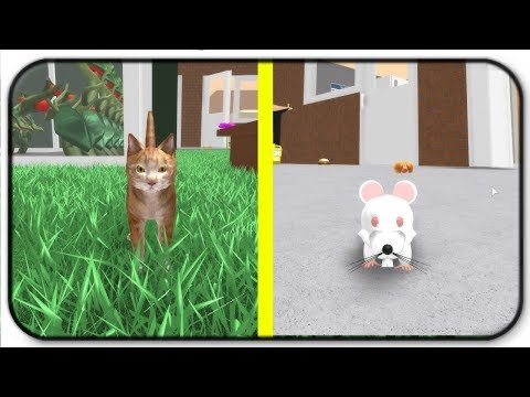 Hamsters In The House Roblox Animal House Pets Online Game Let S Play Random Fun Video Hamster Care Sheet Guide How To Care For Your Hamster Let S Play A Game Of Cat And Mouse Roblox Hamster Simulator Youtube