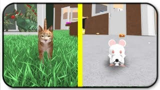 Let's Play A Game Of Cat And Mouse - Roblox Hamster Simulator