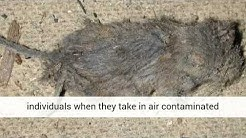 Do you have mice in your duct work?