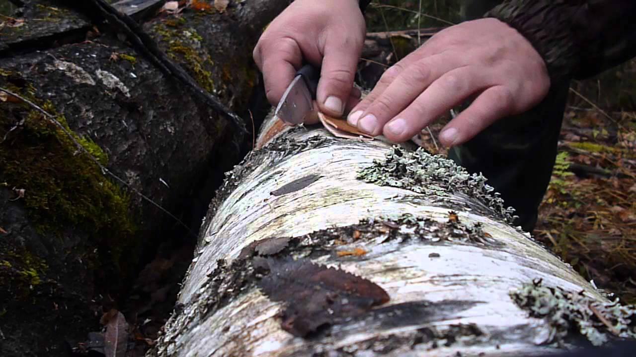 Как изготовить манок на лося своими руками фото 75