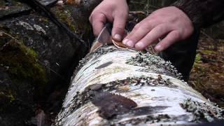 гуделка из бересты при помощи ножа изула