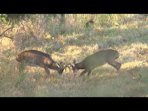 NEW Deer Hunting Regulations For 2018