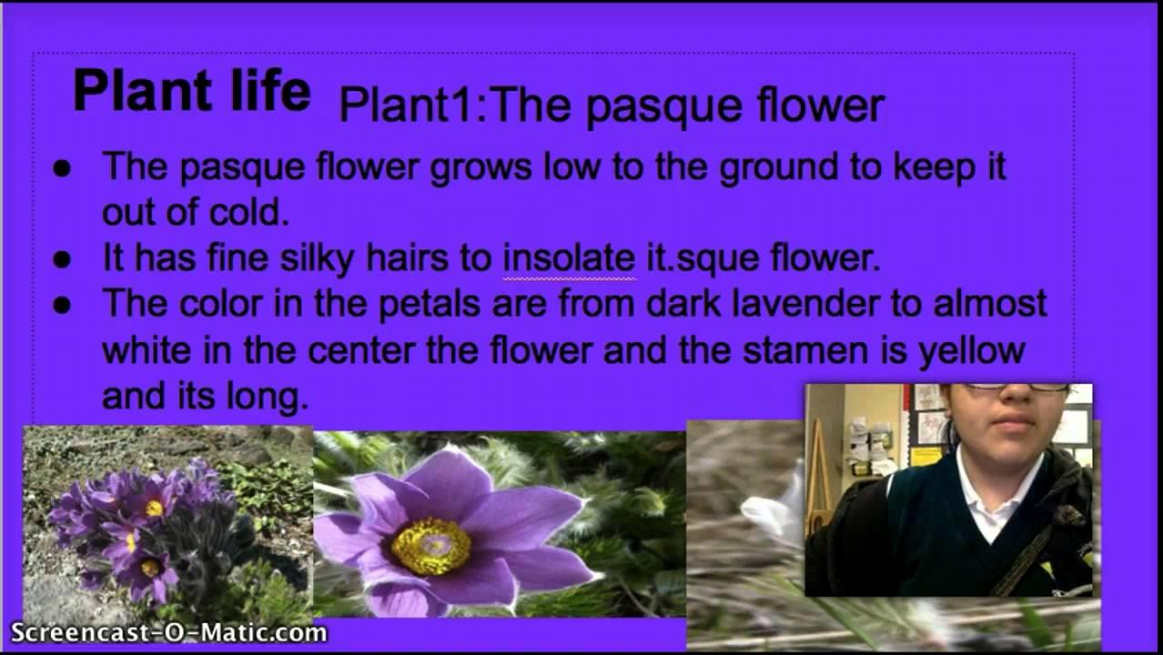 Tundra Plant Life Youtube