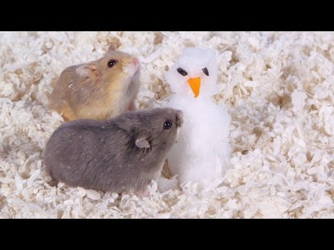 Day 9: Building a Snowman - Cute Hamsters: 12 Days of Christmas