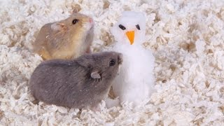 day 9 building a snowman cute hamsters 12 days of christmas