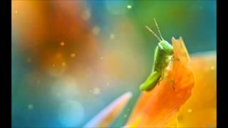 Ken Hayakawa - Organic Pictures (Daso Remix)