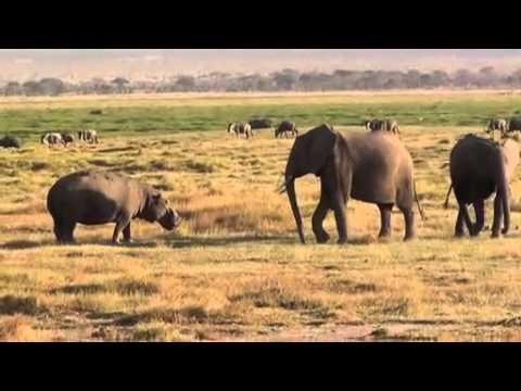 Elephant Vs Hippo thumbnail