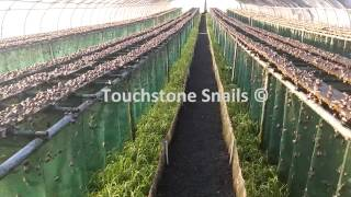Touchstone Snail Technologies LTD - Snail Farming - Curtain Method