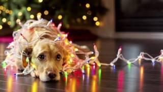 Jule Gospel...glædelig jul