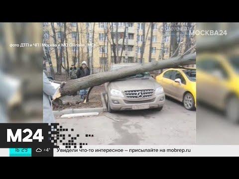Сильный ветер сохранится в столице в пятницу - Москва 24