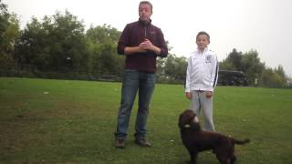 Spice Up Your Dog Walk - Games And Fun Activities To Play With Your Dog