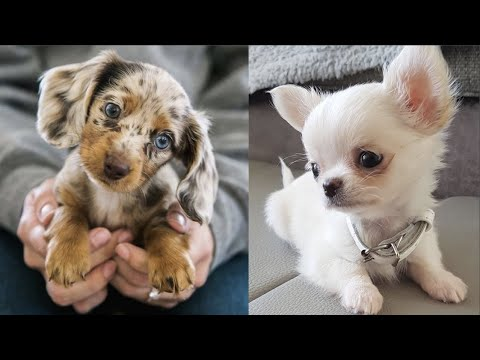 AWW CUTE BABY ANIMALS Videos Compilation Funniest and cutest moments - Cutest animals #2