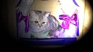 Кошка, начинающая актриса Театр из коробки своими руками