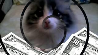 Фото-Слайд котят