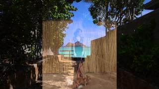 ハワイドッグでは「犬と一緒に南国ハワイへ行きたい!」方の夢を叶えま...