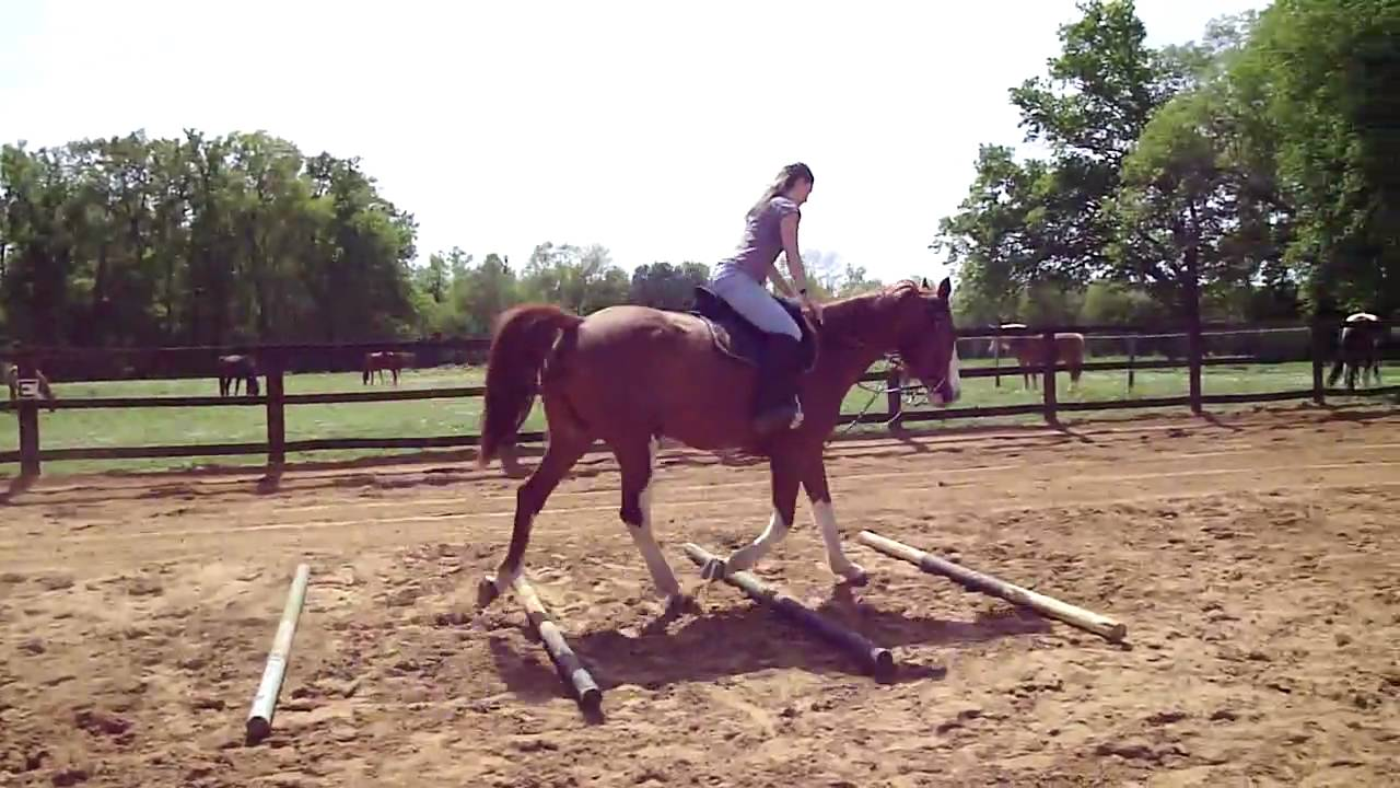 cheval au trot, barre au sol 2 - YouTube