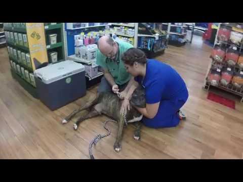 pitbull reaction to a vet !!!