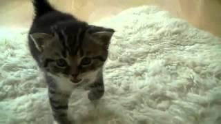 Приколы. Озорные котята учатся ходить.