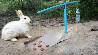 Fantastic Hole Rabbit Trap Make From Blue Pipe N Cardboard