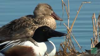 Download Video 2017 Bird Hunting Forecast - Texas Parks and Wildlife MP3 3GP MP4