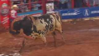 Final rodeio de Colorado - PR 2014 com Almir Cambra