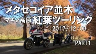 メタセコイア並木 マキノ高原 紅葉ツーリング PART1