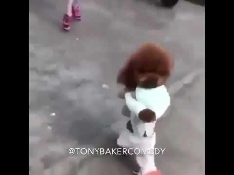 Adorable Dog rushing home, late for playtime