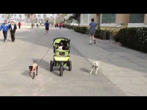 Download Dogs Walking Dogs