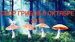Сбор грибов в октябре 2018