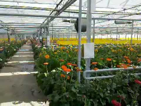 Livraison de bouquets de fleurs for Livraison bouquet de fleurs a domicile