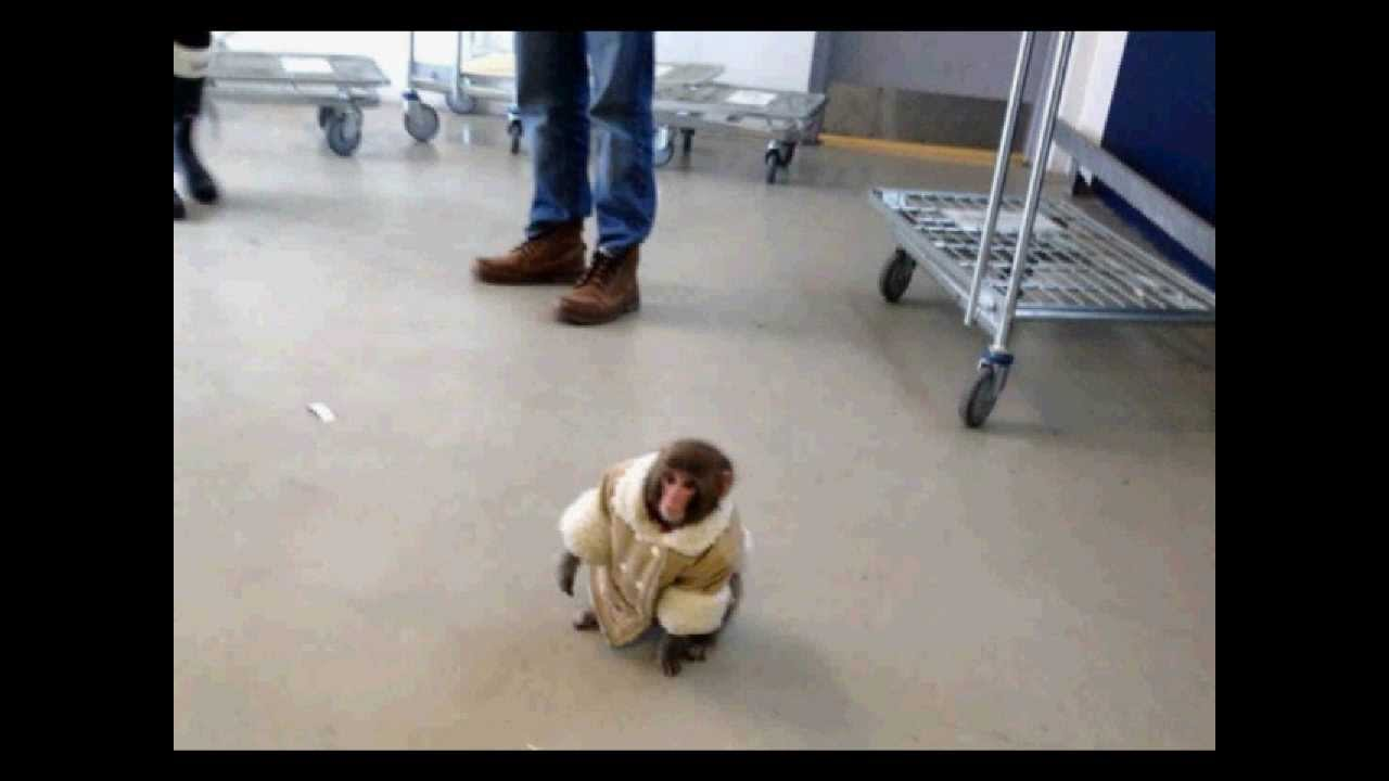 Monkey In A Coat Spotted AT IKEA - YouTube