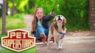 Abc3   Pet Superstars : Josie & Beagle