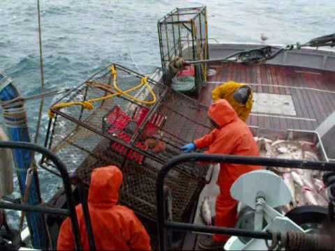 Pot cod fishing youtube for Alaska out of state fishing license