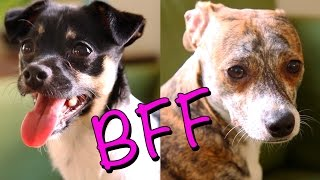 11 Things All BFFs Know To Be True (As Told By Puppies)