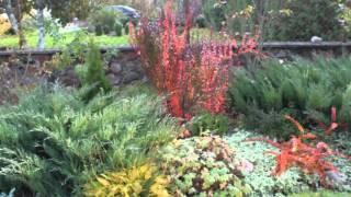 видео композиции с хвойниками в ландшафтном дизайне