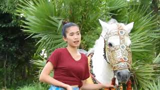 Wow!! Fantastic White Horse Training How To Teach Your Horse At Home