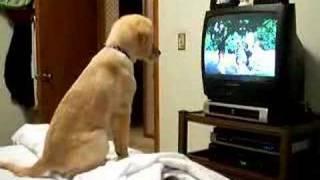 """Molly watching """"Air Buddies"""""""